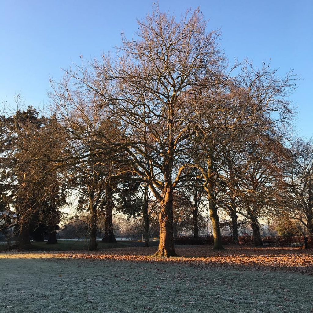 A beautiful winters walk to school this morning.