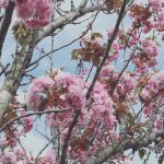 From night skys to blossom trees This season gives ahellip